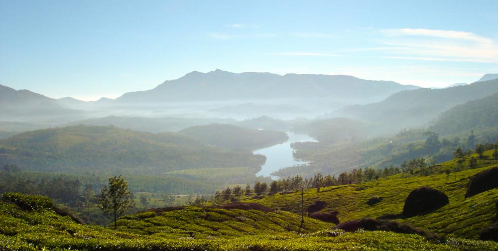 Morning views around Munnar
